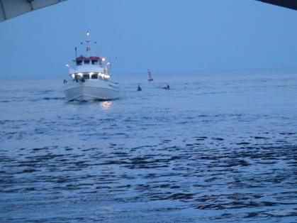 Shark River Inlet.