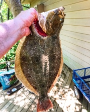 Five lb Fluke on Fire Island.