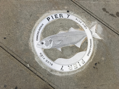 bluefish plaque sheepshead