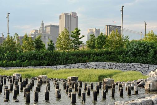 Salwater marshes at Brooklyn Bridge Park.