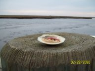 Clam on the half on the dock.