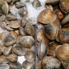 Clam variety,