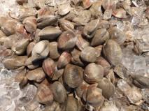 Clams at San Gennaro.
