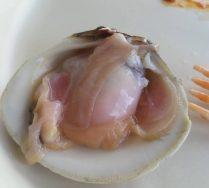 cropped-clam.jpg