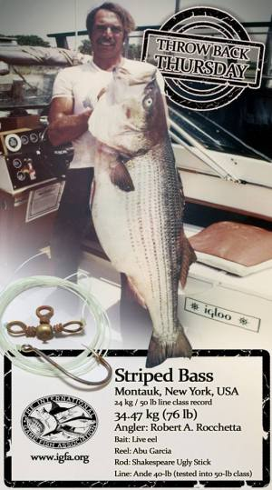 nys record striped bass