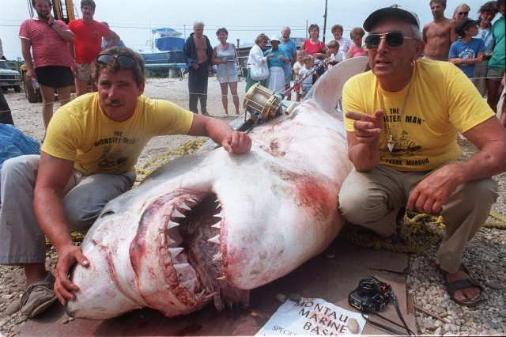 record white shark