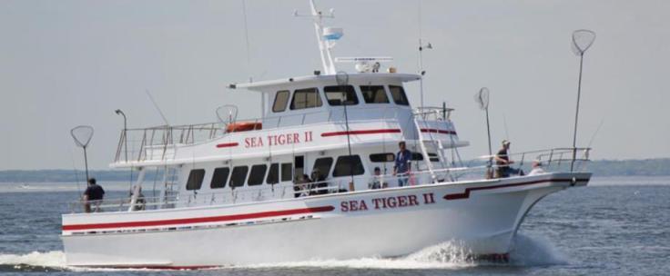 sea tiger.jpg