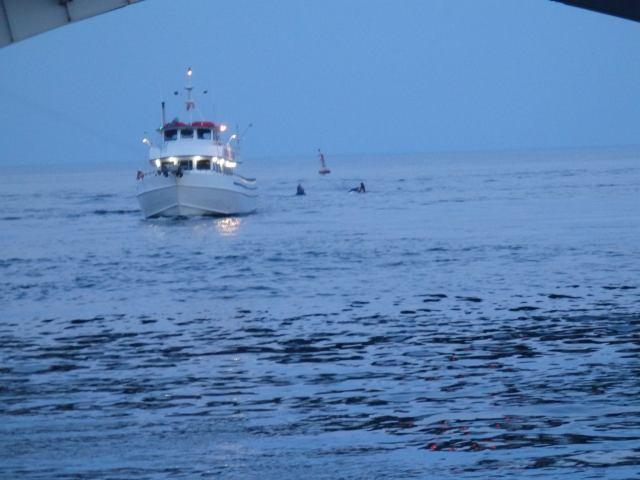 bradley shark inlet