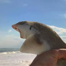 jim shark 2